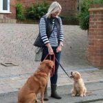 me walking dogs sally ann
